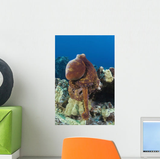 Hawaii, Octopus Cyanea Diguising Itself As A Part Of The Coral Reef Wall Mural