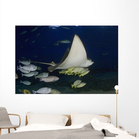Hawaii, Spotted Eagle Ray And Reef Fish Wall Mural