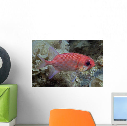Close-Up Side View Of A Pale Soldierfish With A Large Parasitic Isopod Wall Mural