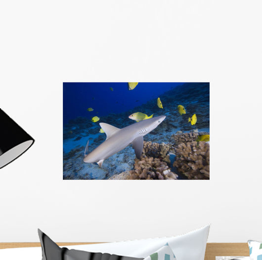 Grey Reef Shark Surrounded By Bright Yellow Fish At The Ocean Floor Wall Mural