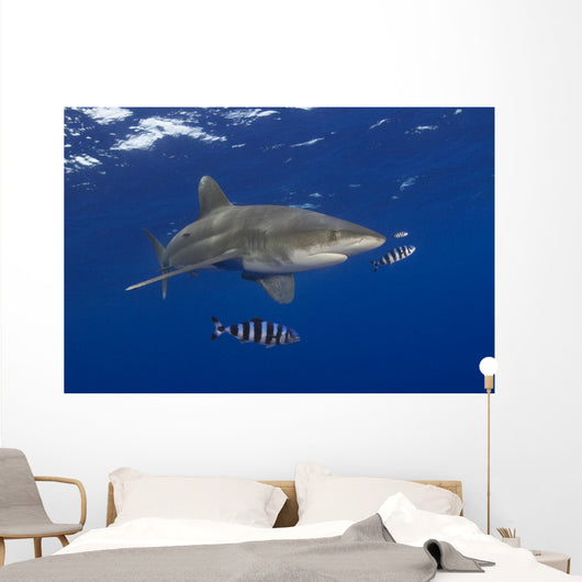 Hawaii, Oceanic Whitetip Shark With Pilot Fish Wall Mural