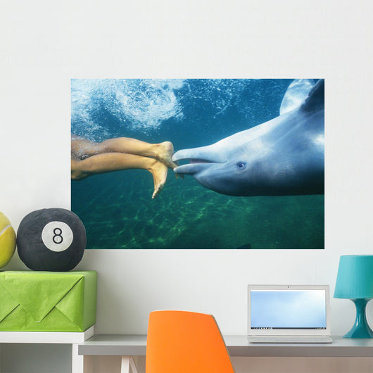 Underwater View Wall Mural