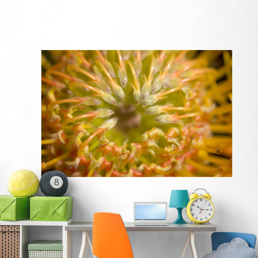 Close-Up Top View Red Pin Cushion Protea Blossom Or Leucospermum Wall Mural