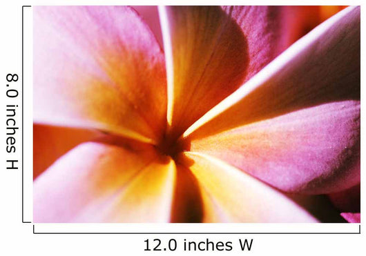 Extreme Close-Up Of A Plumeria Blossom, Pink And Yellow Wall Mural