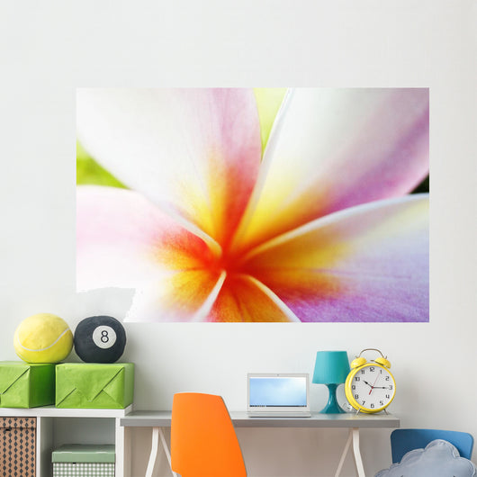 Extreme Close-Up Of A Plumeria Blossom, Pink, White And Yellow Wall Mural
