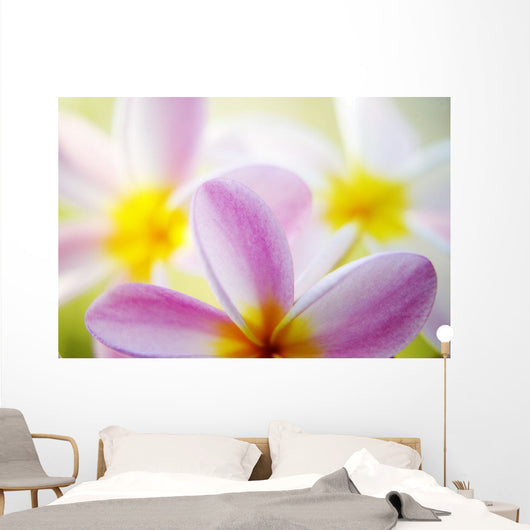 Pink Plumeria Flowers With Yellow Centers, Interesting Angle And Blur Wall Mural