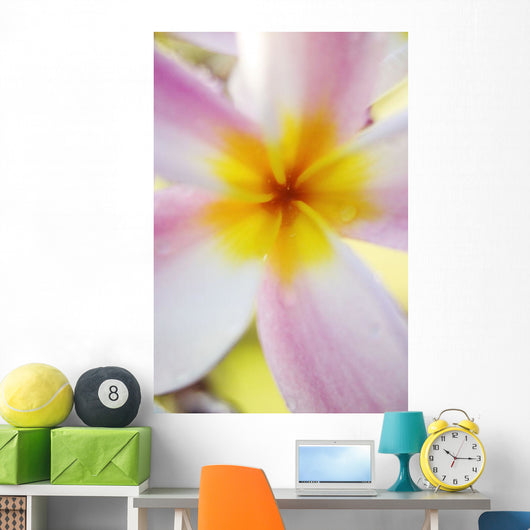 Pink Plumeria Flower With Yellow Center, Extreme Close-Up, Soft Focus Wall Mural