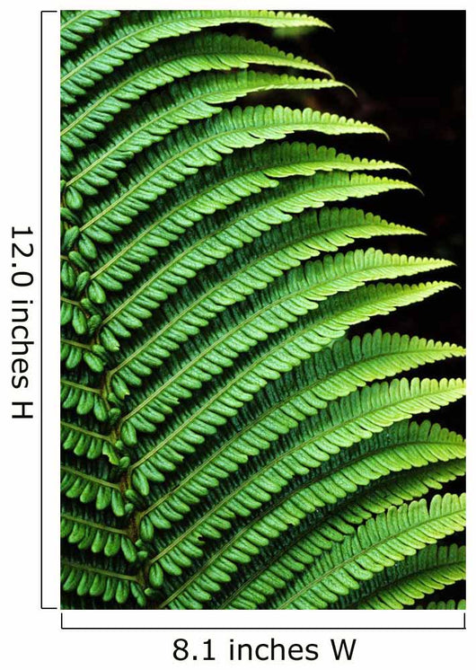 Hawaii, Close-Up Of Bright Green Ferns Wall Mural