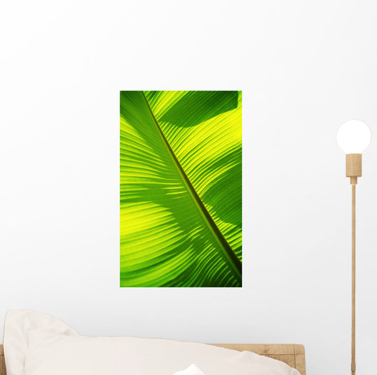 Close-Up Of Bright Green Banana Leaf Pattern Forms Off The Main Rib Wall Mural