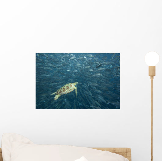 Green Sea Turtle Surrounded By Schooling Bigeye Jacks Wall Mural