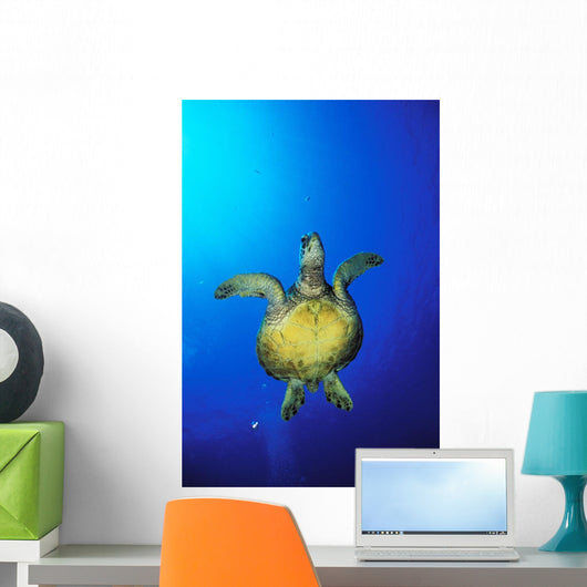 Hawaii, Green Sea Turtle Swimming In Clear Blue Water, View From Below Wall Mural