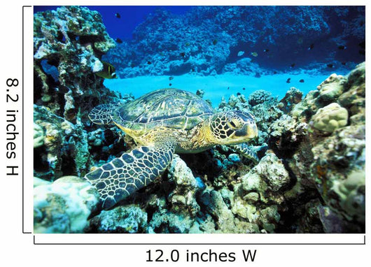 Hawaii, Green Sea Turtle On Reef With Tropical Fish Wall Mural