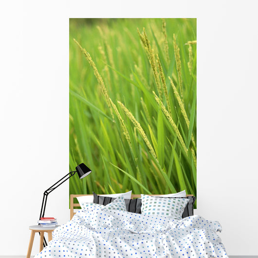 Indonesia, Bali, Close-Up Of Green Rice Plants Wall Mural