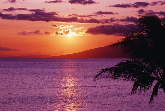 Hawaii, Maui, Beautiful Tropical Sunset With Palm Tree Wall Mural