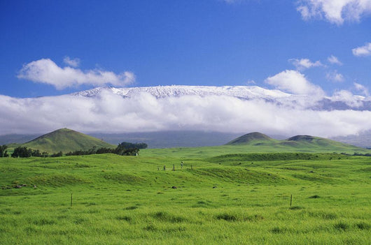 View Of Snowcapped Mauna Kea From Lush Rolling Hills Below Wall Mural