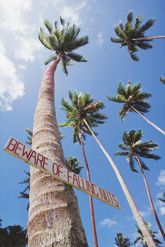 Fiji, Vanua Levu, Tall Coconut Trees And Sign Beware Of Falling Nuts Wall Mural