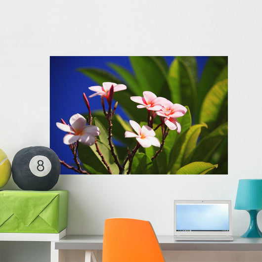 Pink Plumeria Blossoms Growing From Tree, Blue Sky Wall Mural