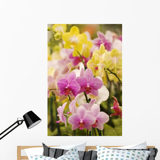 Hawaii, Field Of Pink And Yellow Orchids Wall Mural