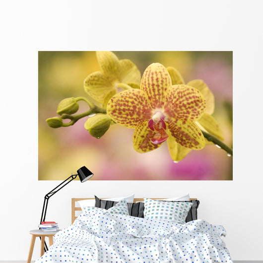 Hawaii, Close-Up Of Yellow Spotted Orchids With Dewdrops Wall Mural