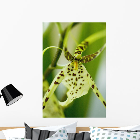 Close-Up Of Bright Green Spider Orchid Wall Mural