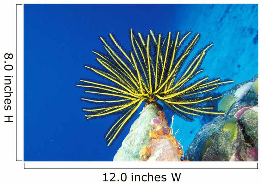 Micronesia, Bright Yellow Crinoid Wall Mural