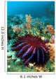 Thailand, Reef Scene With Crown-Of-Thorns Starfish Wall Mural