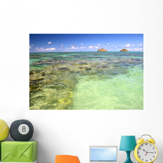 Hawaii, Oahu, Lanikai, Mokulua Islands, Coral Head Wall Mural