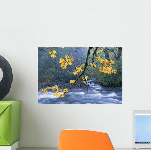 Oregon, Cascade Mountain Range, Yellow Autumn Leaves With Stream Wall Mural