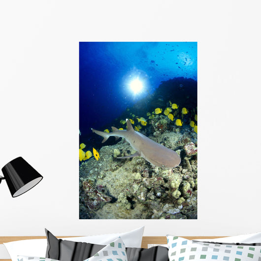 Hawaii, Whitetip Reef Shark Over Reef, Butterflyfish Sunburst A78F Wall Mural