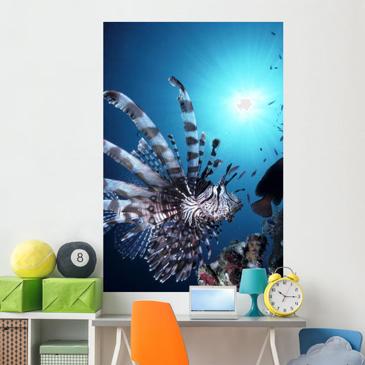 Fiji, Volitan Lionfish, Close-Up Side View, Sunburst A82F Wall Mural