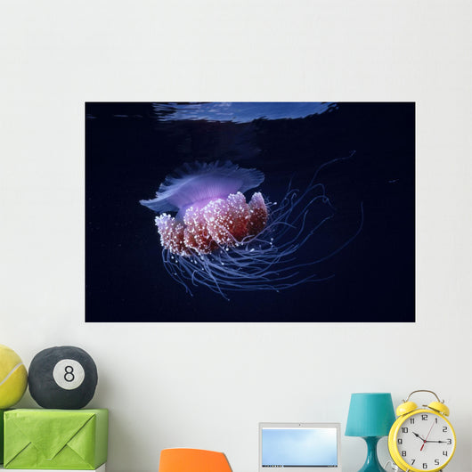 Papua New Guinea, Purple Jellyfish Midwater Surface Visible A88D Wall Mural