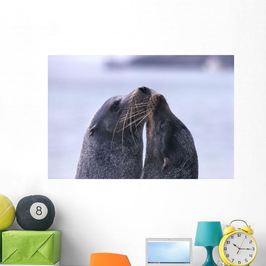 Galapagos Islands, Sea Lions Heads Together, Close-Up A96D Wall Mural