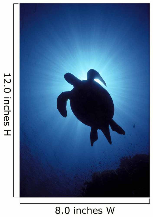 Hawaii, Green Sea Turtle Silhouetted, Sunburst View From Below A77C Wall Mural