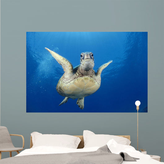 Hawaii, Maui, Front View Of Green Sea Turtle Midwater A77A Wall Mural
