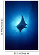 Hawaii, Common Manta Ray Silhouette A86B Wall Mural