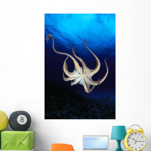 Hawaii, Day Octopus View Of Underside Near Surface, Midwater A87B Wall Mural
