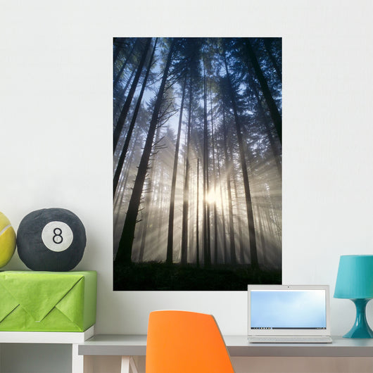 Trees In Forest A25H Wall Mural