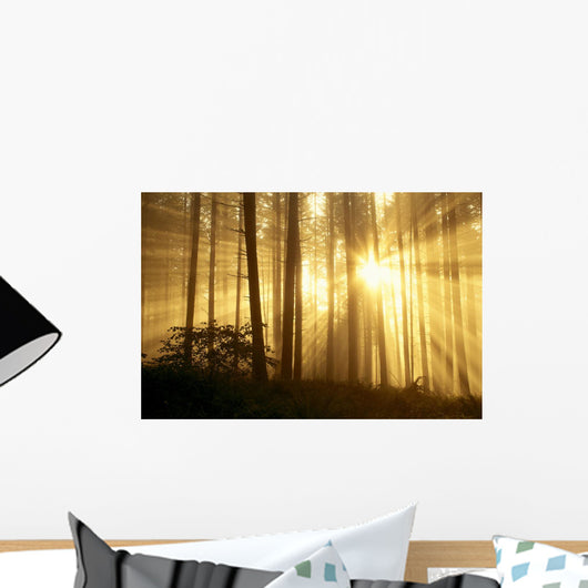 Trees In Forest A24E Wall Mural