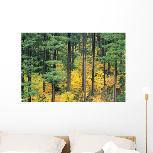Green And Yellow Colors A24B Wall Mural