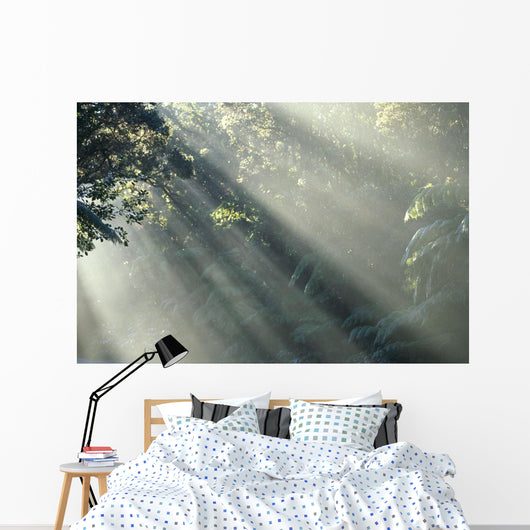 Mist Through Trees In Rainforest A24H Wall Mural