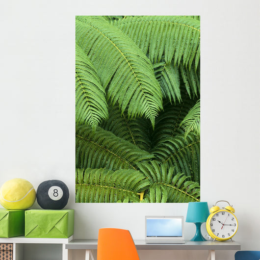 Hawaii, Close-Up Detail Of Hapuu Ferns On Plant, Environment A24D Wall Mural