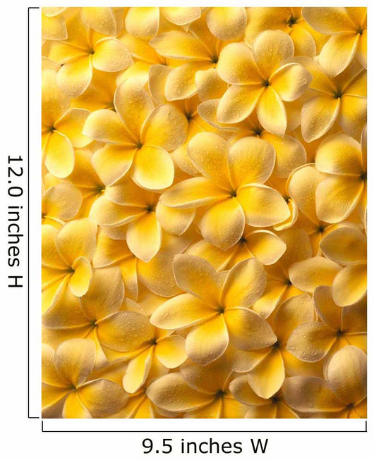 Yellow Plumeria Flowers With Water Droplets Wall Mural