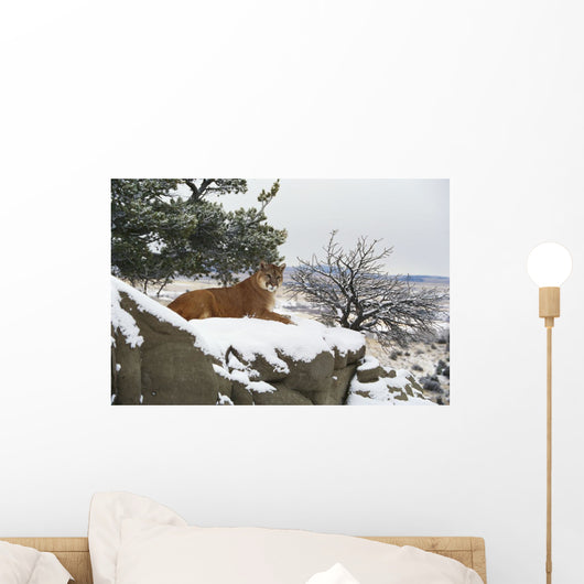 Montana Mountain Lion Resting In Day Bed Winter, Snow A52G Wall Mural