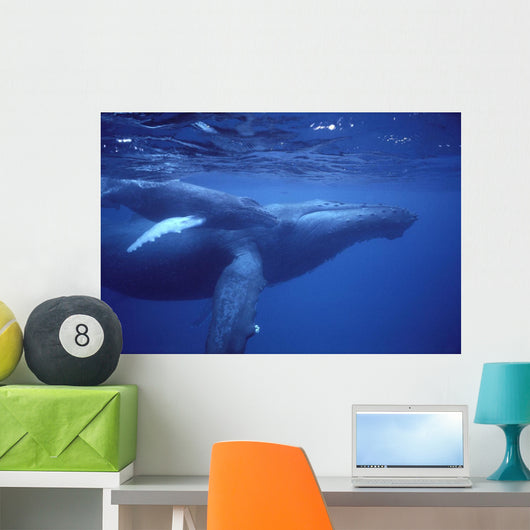Hawaii, Humpback Whales Mother And Calf Underwater Near Surface A94G Wall Mural