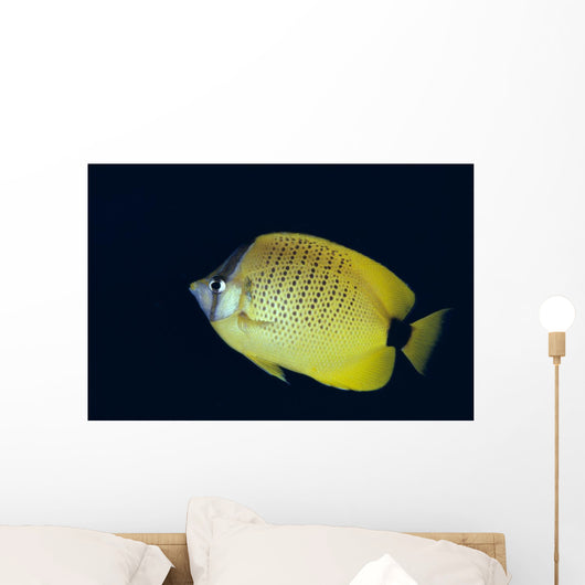 Hawaii, Close-Up Side View Of Milletseed Butterflyfish A83G Wall Mural