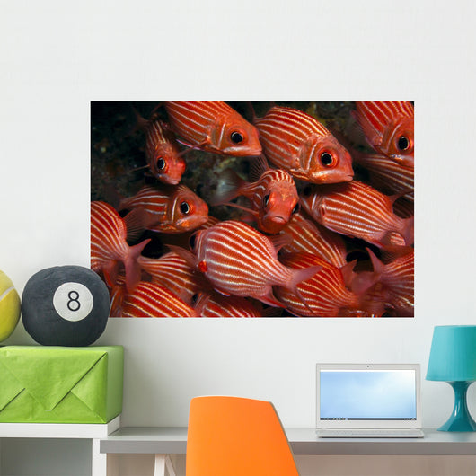 School Hawaiian Squirrelfish Endemic, Many Close-Up A84C Wall Mural