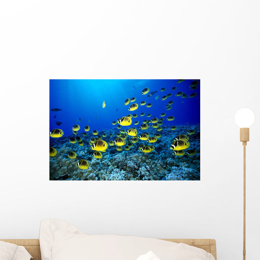 Hawaii, Schooling Raccoon Butterflyfish Blue Ocean A82C Wall Mural