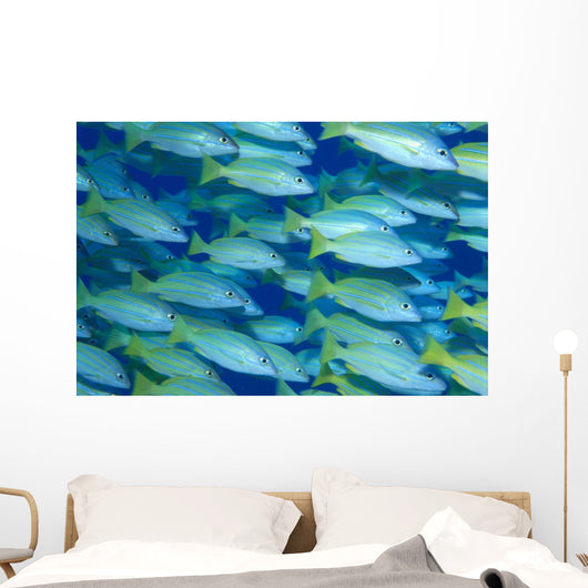 Hawaii, School Of Blue Stripe Snapper Side View A84H Wall Mural