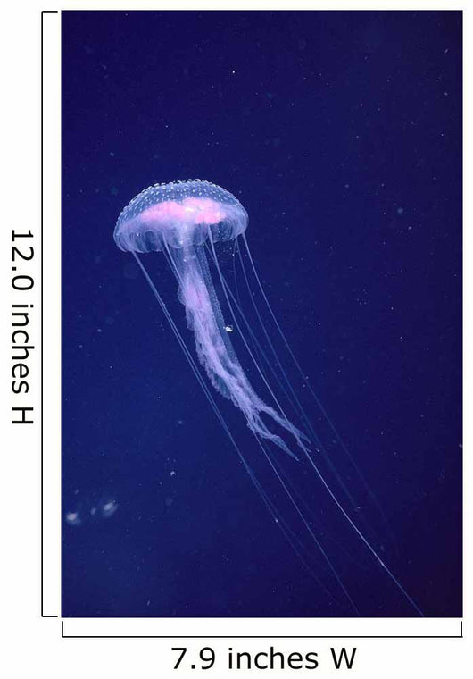 Hawaii, Jellyfish With Long Tentacles In Blue Sparkling Ocean A88E Wall Mural