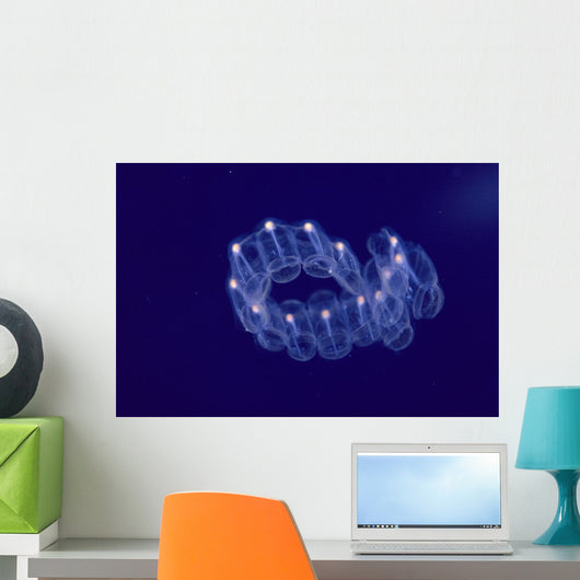 Hawaii, Close-Up Of Plantonic Salp Floating In Clear Blue Ocean A88B Wall Mural